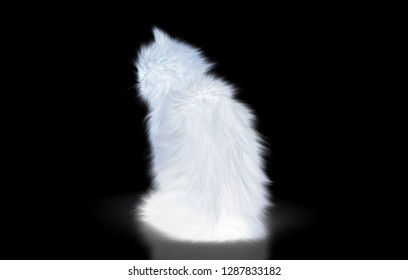 Long-haired Norwegian cat isolated on white background, very hairy, rendering3d, 3d illustration