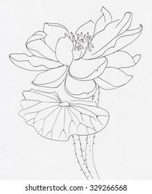 Lotus flower line art drawing. Original style.