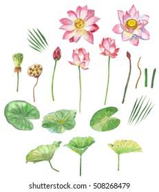 Lotus Flowers. Hand painted watercolor clip art