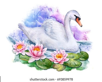 Lotus. Water lilies and white swan. Watercolor. Illustration. Handmade