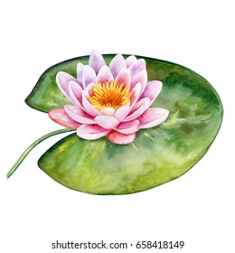 Lotus. Water lily isolated on white background. Watercolor. Illustration