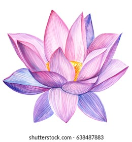 lotus watercolor style isolated.
