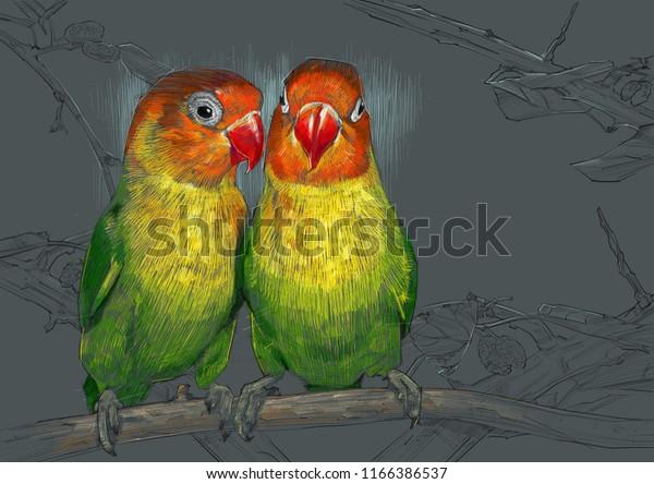 Love Birds Sketch Color Pencil Drawing Stock Illustration 1166386537
