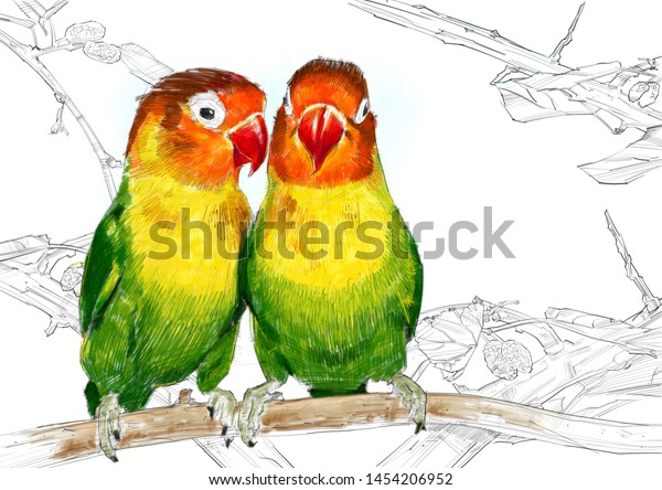 Lovebirds Colour Pencil Drawing On White Stock Illustration 1454206952