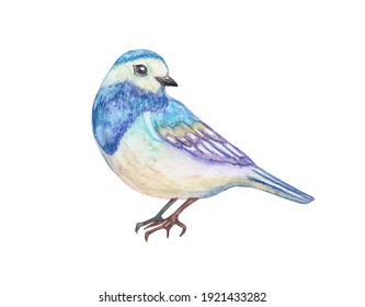 lovely little bird. watercolor painting