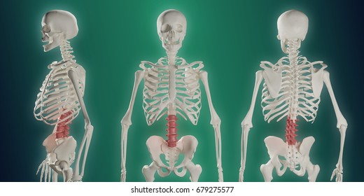Lower Back Pain Lumbar Spine Anatomy Stock Illustration - Royalty ...