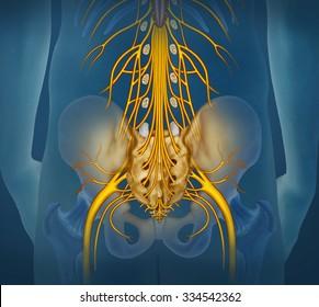 Lumbar nerve branch