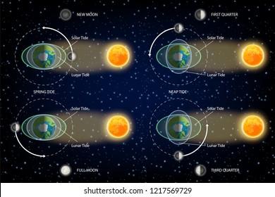 Lunar and Solar tides diagram. illustration. Educational poster, scientific infographic, presentation template.