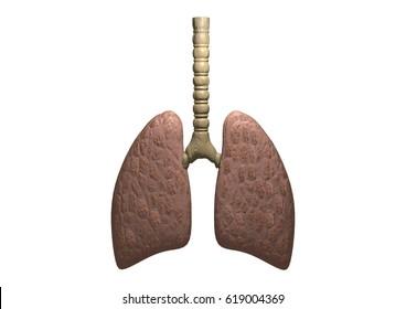 Lung 3D rendering