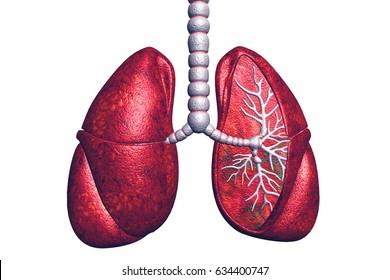 Lung Disease.3d render