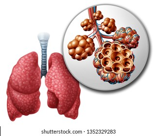 Lung pulmonary alveoli or alveolus anatomy diagram as a medical concept of a close up of the human anatomy and respiratory or respiration medicine as a 3D illustration on a white background.