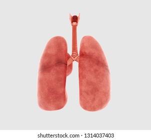 Lungs 3D Rendering