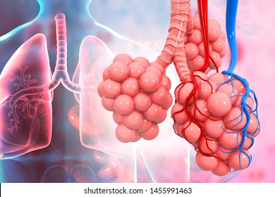 Lungs alveoli on medical background. 3d illustration