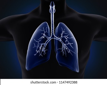 lungs xray; 3d illustration