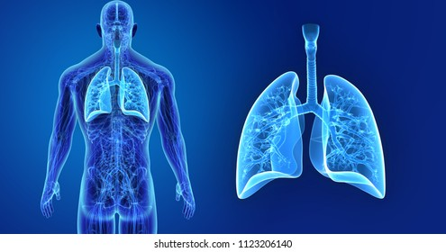 Anatomy Images, Stock Photos & Vectors | Shutterstock