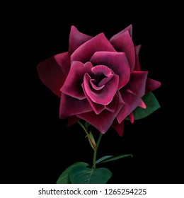 Luxurious red rose on black background. Amazing unusual artistic image of the beauty of nature