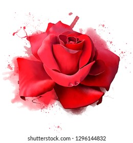 A luxurious red rose on a white background, with splashes of paint