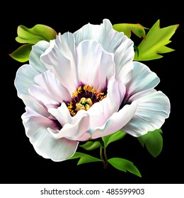Luxurious white poppy with petals on a black background closeup.