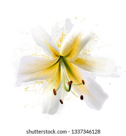 Luxurious white-yellow Lily, close-up on a white background with splashes of paint and sketch elements