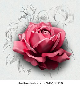 luxury rose,closeup, isolated on a white background, with elements of sketch of beautiful flowers in the background