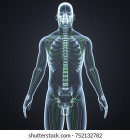 Lymph nodes 3d illustration
