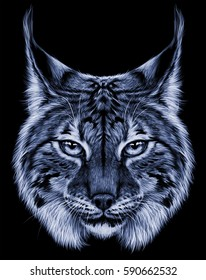 lynx head wild cat predator . realistic illustration animal portrait on black background