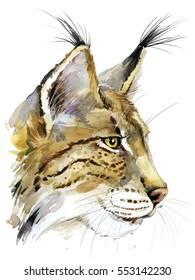 lynx  watercolor illustration. bobcat