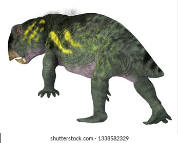 Lystrosaurus Dinosaur Tail 3D illustration - Lystrosaurus was a dicynodont therapsid herbivore dinosaur that lived in several countries during the Triassic and Permian Periods.