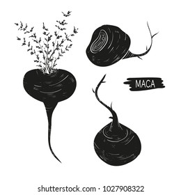 Maca. Leaves, root. fetus. Black silhouette on white background. Set.