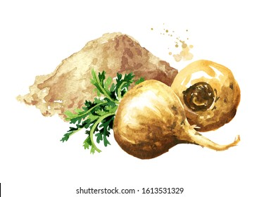 Maca root or Peruvian ginseng with maca powder, Organic vegetable, superfood. Watercolor hand drawn illustration isolated on white background
