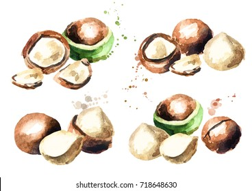 Macadamia nuts set on white background. Watercolor hand-drawn illustration