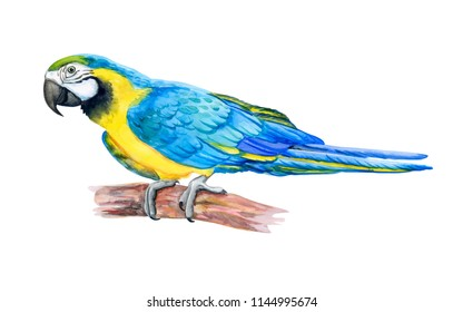 Macaw Blue-and-yellow. Golden and blue Parrot isolated on white background. Ara. Watercolor. Illustration. Handmade. Template