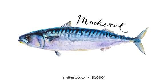 Mackerel fish whole isolated on a white background