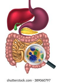 Magnifying glass showing bacteria or virus cells in the human digestive system, digestive tract or alimentary canal. Possibly good bacteria or gut flora such as that encouraged by pro biotic products