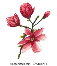 magnolia flower branch watercolor