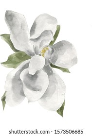 magnolia flower watercolor illustration, isolated on white background