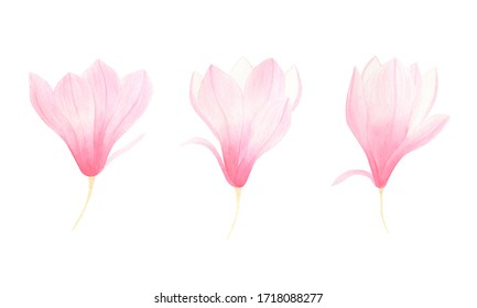 Magnolia flower watercolor illustration set isolated on white background. Pink flowers for wedding invitation, greeting cards, design. Hand painted floral collection.