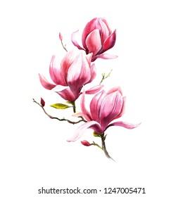 magnolia flowers watercolor pink beautiful art artwork illustration