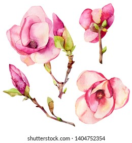 Magnolia flowers in a watercolor style isolated. Can be used for background, texture, wrapping papper, frame or border.