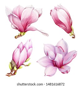 Magnolia pink flowers watercolor set. Hand drawn spring beautiful blossoms. Isolated on the white background.