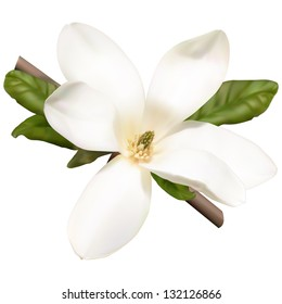 Magnolia twig with white flower