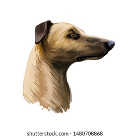 Magyar agar Hungarian breed closeup digital art illustration. Greyhound originated in Hungary, gazehound domesticated sighthound portrait. Purebred canine with long muzzle, isolated on beige