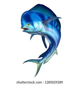 Mahi mahi or dolphin fish on white. Mahi mahi blue big fish realistic illustration.