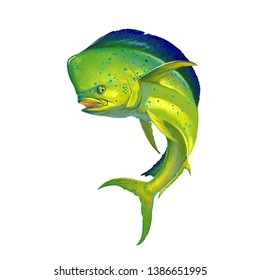 Mahi mahi or dolphin fish on white. Realistic illustration of mahi-mahi or dolphin fish on white background isolate.