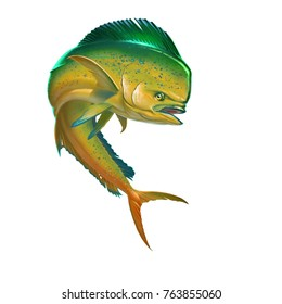 Mahi mahi yellow or dolphin fish on white