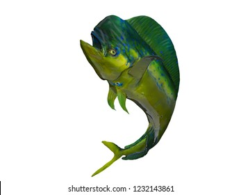 Mahimahi dolphinfish posing curved body 3d render isolated background