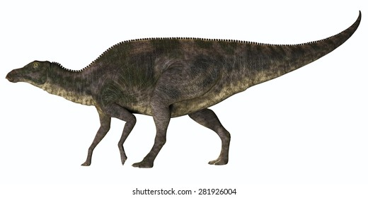 Maiasaura Dinosaur Profile - Maiasaura was a duck-billed herbivorous dinosaur that lived in Montana, USA in the Cretaceous Era.