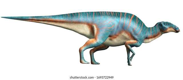 Maiasaura, a hadrosaur, on a white background. This duck billed dinosaur, now extinct, was an herbivore that lived during the cretaceous period. 3D Rendering.