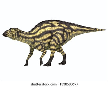 Maiasaurus Dinosaur Young Juvenile 3D illustration - Maiasaurus young juvenile was a herbivorous dinosaur that lived in Montana during the Cretaceous Period.