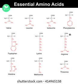 Main essential amino acids with marked radicals, chemical structural formulas, 2d raster set on white background
